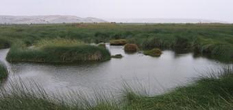 Desarrollo y Medio Ambiente