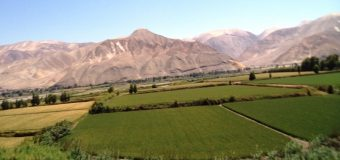 Arequipa: Solo 11 de cada 100 agricultores usan semillas certificadas